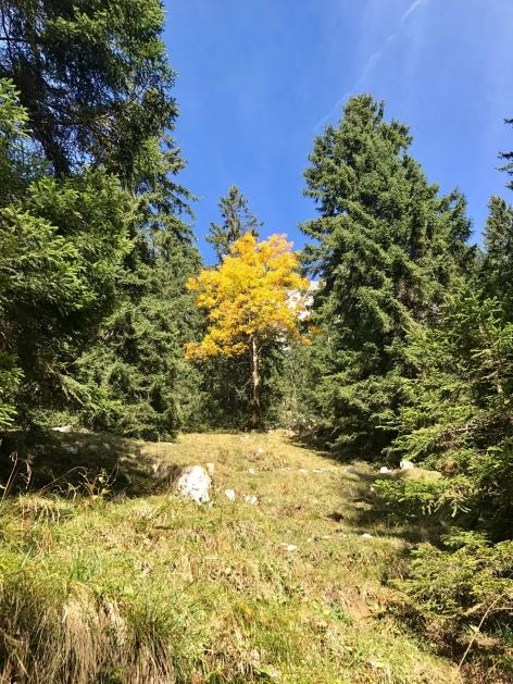 Outville Herbstwandern Breitenstein 20