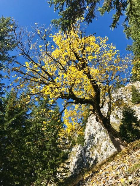 Outville Herbstwandern Breitenstein 25