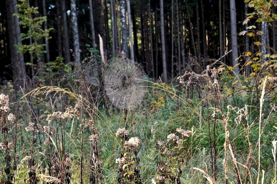 Outville Herbstwandern Perlacher Mugl 7