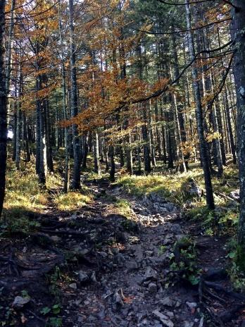 Wanderung_Jochberg_Walchensee_7