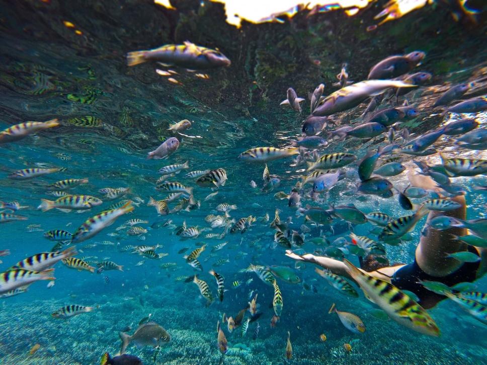 Surfen Indonesien 7