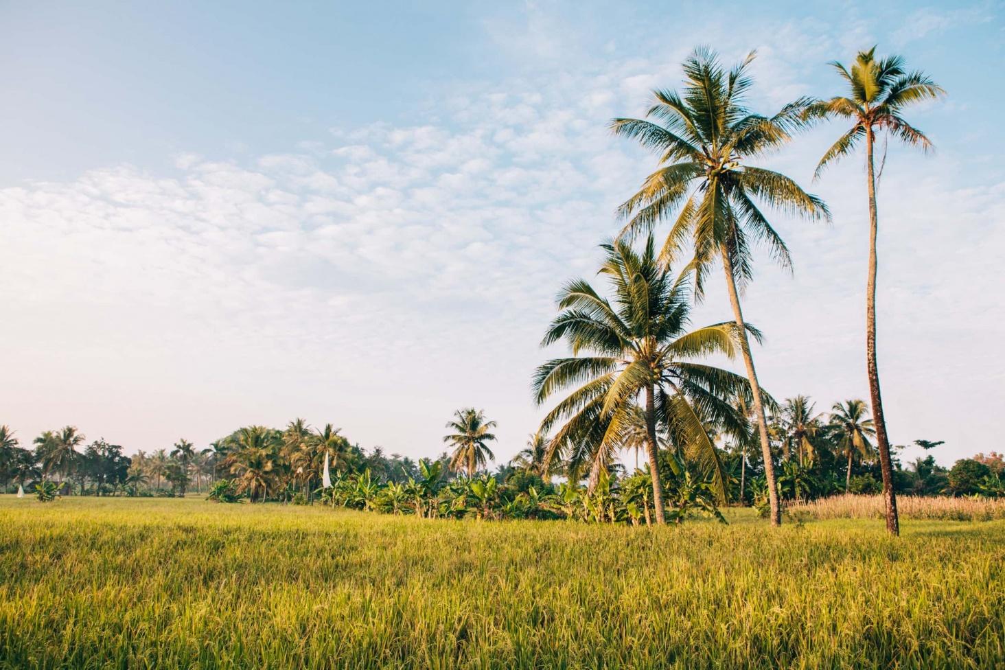 Surfen Indonesien Titel 3