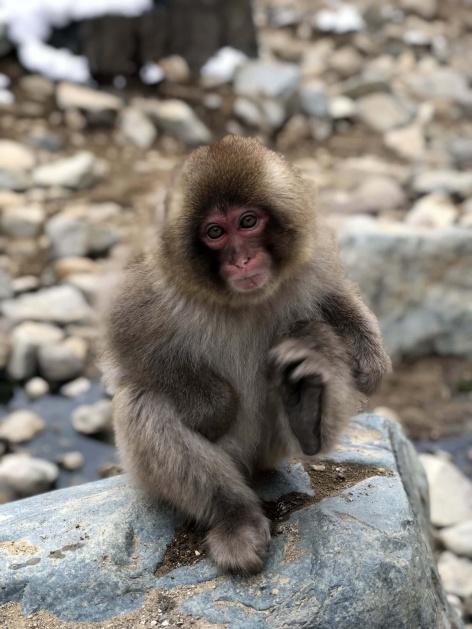 Freeride Japan Snow Monkeys 1