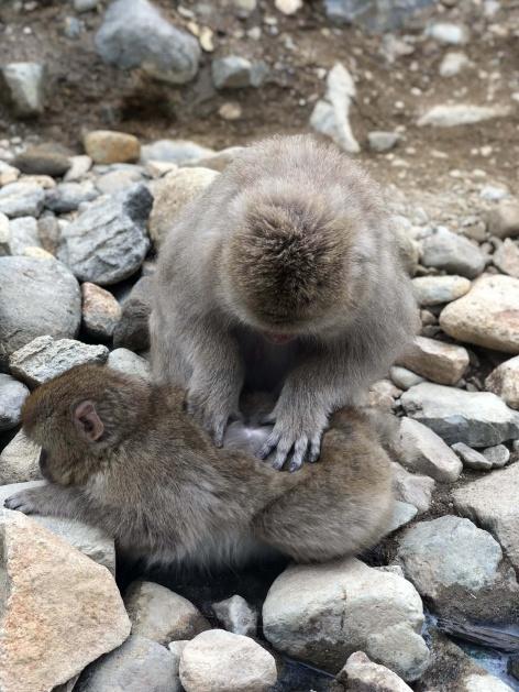 Freeride Japan Snow Monkeys 2